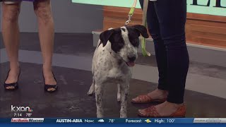 Austin Humane Society hopes to adopt out 100-plus pets