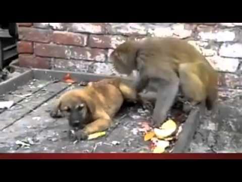 Xxx Mp4 Bandar Aur Dog Ki Masti 3gp Sex
