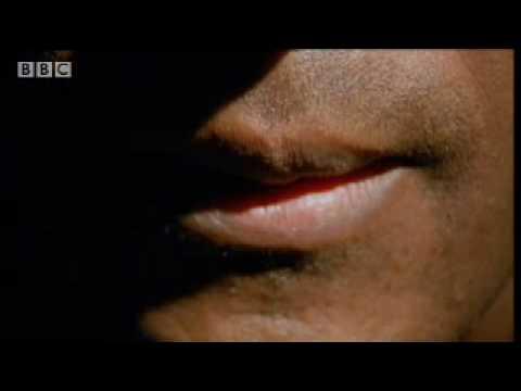 Xxx Mp4 Brave African Masai Tribe Test Their Bravery On Back Of A Black Rhinoceros BBC Wildlife 3gp Sex