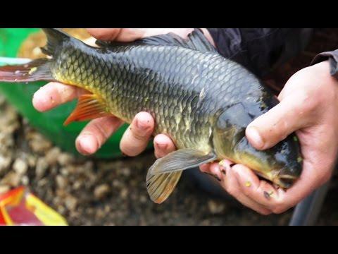 видео рыбалка пикером