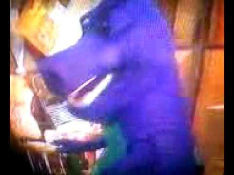 Xxx Mp4 Barney And The Backyard Show 3gp Sex