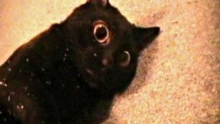 Talking Kitty Cat 7.5 - Sylvester's Catnip Overdose