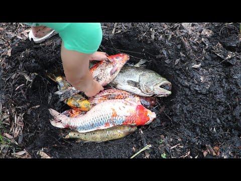 Xxx Mp4 BURYING MY 25 000 DOLLAR FISH COLLECTION 3gp Sex