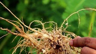 Organic Fertilizer & Pesticide | जैविक खाद और जैविक कीटनाशक | Shashwat Yogic kheti