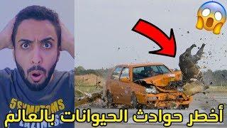 أخطر حوادث الحيوانات بالعالم/هجوم كلب على سيارة الشرطه!!!+18😱⛔️
