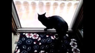Black Cat Mogli breaks out!