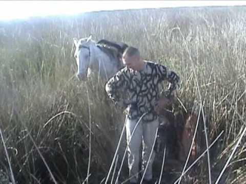 caza arco caballo jabali bowhunt horseback boars