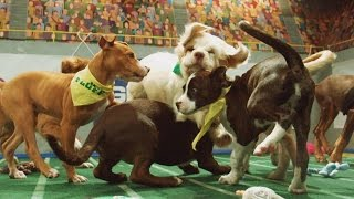 Power Puppies | Puppy Bowl