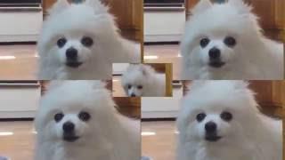 Dog Sports (Wii Sports)
