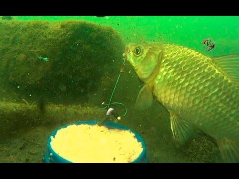рыбалка на карася снасть пробка