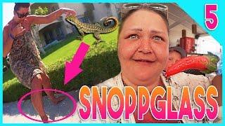 MAMMA ATTACKERAD AV EN ÖDLA + SNOPPGLASS | EGYPTEN DAG 5