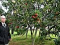 Download Video GEMPAR....!!!, Pohon APEL ini tumbuh bermacam-macam buah 3GP MP4 FLV