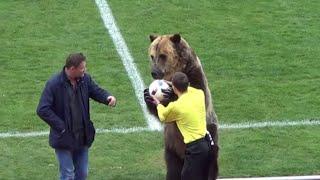 دب عملاق.. يفتتح إحدى مباريات الدوري الروسي ويحيي الجمهور
