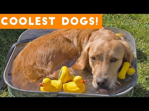 Dog Days of Summer Coolest Dogs of 2018 Funny Pet Videos