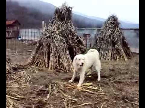 qent e sharrit gllogje