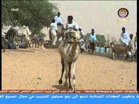 ياهو دة السودان الجمال