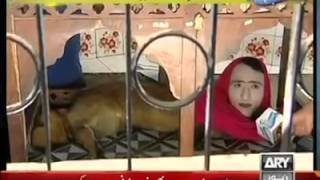 Human face and animal body in Pakistan