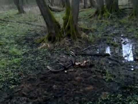 zrzuty jeleni2012.