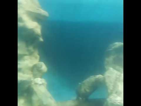 Projeto Tamar na Praia do Forte - BA