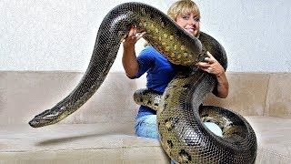 Exotic Creatures that Became Invasive Species