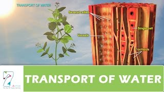 TRANSPORT OF WATER
