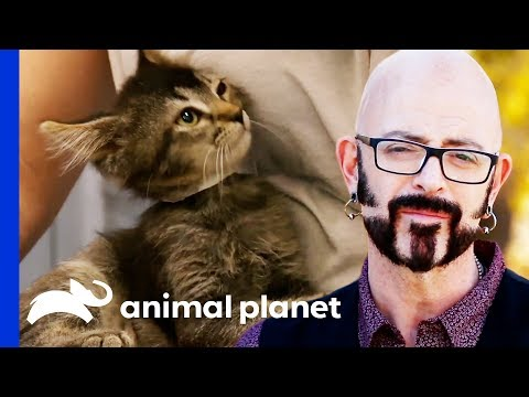 Jackson Galaxy Is On A Mission To Rehome 50 Adorable Kittens My Cat From Hell