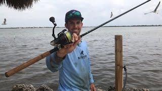 Fishing for Baby Nurse Sharks at Parmer's Resort - Live 🔴
