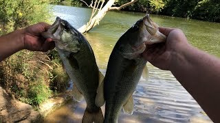 Best Day Of Bass Fishing EVER! (Numbers wise - almost 30 fish caught!)