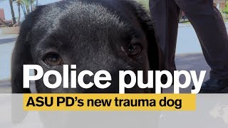 Police puppy: ASU Police Department's new trauma dog