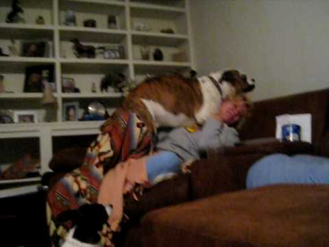 Dog Molesting Mom