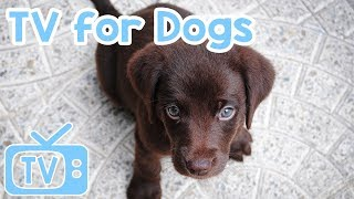 Dog+TV%3A+Entertainment+for+Dogs+and+Puppies%21+Relax+Your+Dog%21