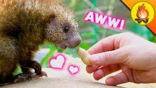Cutest Animals EVER?!