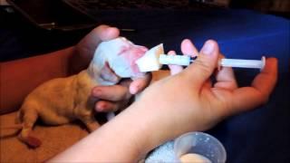 sponge feeding a newborn puppy
