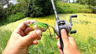 Unexpected GIANT Catch in a TINY Pond!!