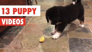 13 Funny Puppies | Dog Video Compilation 2017