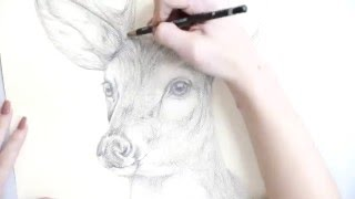 How to Make a Pencil Drawing of a Deer.