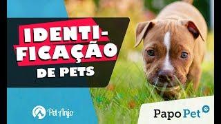 Identificação de Pets // Papo Pet por Pet Anjo