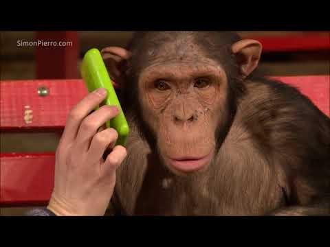Monkeys react to magic