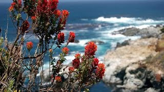 """Peaceful Music, Relaxing Music, Instrumental Music, """"Big Sur"""" by Tim Janis"""