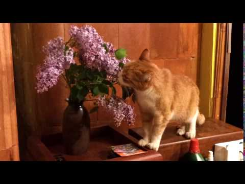 Cat is smelling flowers