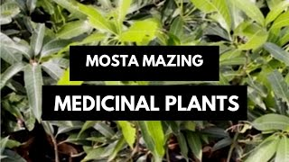 Most Amazing Medicinal Plants | Medicinal Nursery Plants By Lilly Beauty Mantra