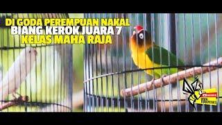 Diganggu BETINA Nakal ! BIANG KEROK Nyungsep Ke Juara 7 Dikelas Maharaja