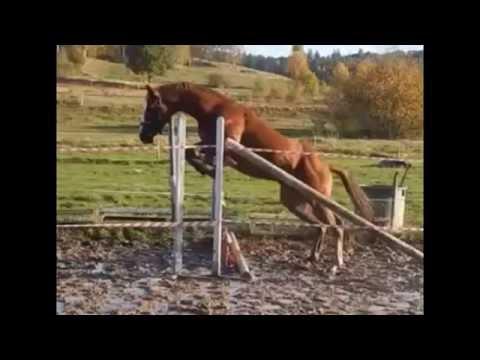 Xxx Mp4 LOCARNO 3 5 Y O ILDAN WIEC Trk MINDANAO Xx Horse For Sale 3gp Sex