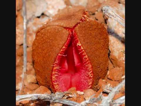 Xxx Mp4 Rude Carrots And Trees Having Sex Pics 3gp Sex