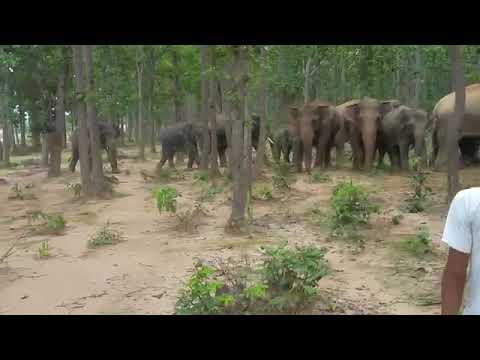Xxx Mp4 Elephant War JAINTGARH JHARKAND 3gp Sex