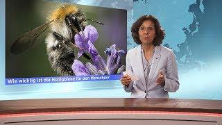Amazing Discoveries News, Bienensterben & Untergrundchristen im Iran