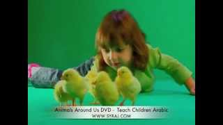 Arabic Song 'These Little Chicks' Teach Kids Colloquial Arabic اللغة العربية