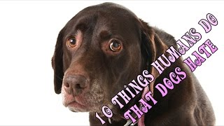 10 Things Humans Do That Dogs Hate