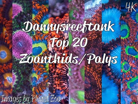 4K Top 20 Zoanthids & Palys