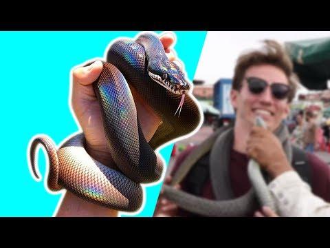 Awesome ZACH KING Magic Tricks Vine | Oddly Satisfying Zach King Magic Vines 2018